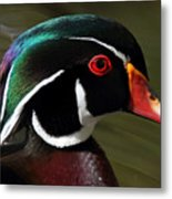 Wood Duck At Beaver Lake Stanley Park Vancouver Canada Metal Print by Pierre Leclerc Photography