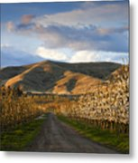 Yakima Valley Spring Metal Print by Mike  Dawson