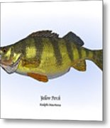 Yellow Perch Metal Print by Ralph Martens