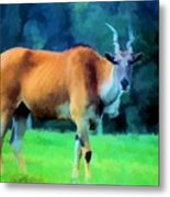 Young Eland Bull Metal Print by Jan Amiss Photography