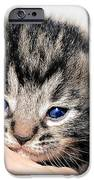 Kitten in a Hand iPhone Case by Susan Leggett