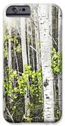Aspen grove iPhone Case by Elena Elisseeva