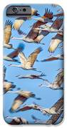 Flight of the Sandhill Cranes iPhone Case by Steven Llorca