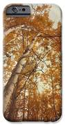autumn aspens iPhone Case by Priska Wettstein