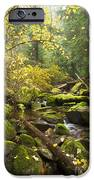 Beauty Creek iPhone Case by Idaho Scenic Images Linda Lantzy