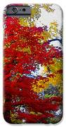 Fall Leaves iPhone Case by Ariane Moshayedi