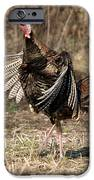 Jake Eastern Wild Turkey iPhone Case by Linda Freshwaters Arndt