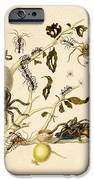Ants Spiders Tarantula and Hummingbird iPhone Case by Getty Research Institute