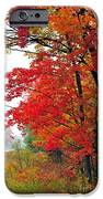 Autumn Along a Country Road iPhone Case by Terri Gostola