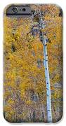 Autumn Aspens iPhone Case by James BO  Insogna