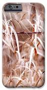 Autumn in the Country iPhone Case by Angie Rea