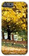 Autumn Maple Tree Fall Foliage - Wonderland iPhone Case by Dave Allen
