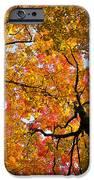 Autumn maple trees iPhone Case by Elena Elisseeva