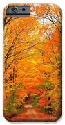 Autumn Tunnel of Trees iPhone Case by Terri Gostola