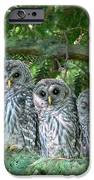 Barred Owlets Nursery iPhone Case by Jennie Marie Schell
