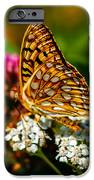 Beautiful Butterfly iPhone Case by Robert Bales