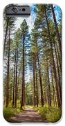Big Valley Views MVSTA Trail iPhone Case by Omaste Witkowski