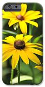 Black Eyed Susan iPhone Case by Marty Koch