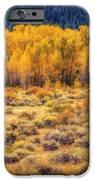 Cache La Poudre River Colors iPhone Case by Jon Burch Photography