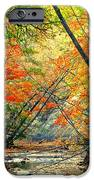 Canopy of Color II iPhone Case by Frozen in Time Fine Art Photography
