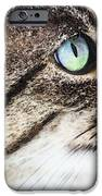 Cat Art - Looking For You iPhone Case by Sharon Cummings