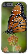 Close-up Pose iPhone Case by Penny Lisowski