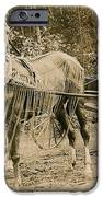 Delivering The Mail 1907 iPhone Case by Floyd Russell