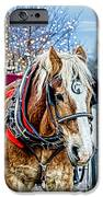 Donald 2 iPhone Case by Baywest Imaging