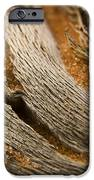 Driftwood 2 iPhone Case by Adam Romanowicz