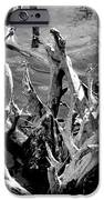 Driftwood on Lost Lake iPhone Case by Michelle Calkins