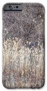 Dry grasses and bare trees in winter forest iPhone Case by Elena Elisseeva