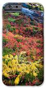 Enchanted colors iPhone Case by Inge Johnsson