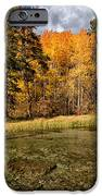 Fall Along Bishop Creek iPhone Case by Cat Connor