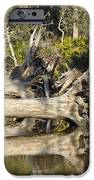 Fallen Trees Reflected in a Beach Tidal Pool iPhone Case by Bruce Gourley