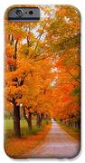Falling For Romance iPhone Case by Lingfai Leung