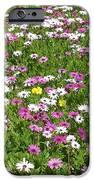 Field of Flowers iPhone Case by Deborah  Montana