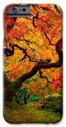 Flaming Maple iPhone Case by Darren  White