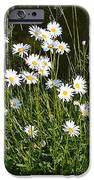 Flora and Fauna iPhone Case by Bishopston Fine Art