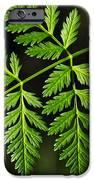 Gereric vegetation iPhone Case by Carlos Caetano