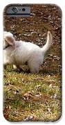 Golden Retriever Puppy iPhone Case by Andrea Anderegg