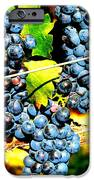 Grapes on the Vine iPhone Case by Kay Gilley