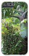 Hawaiian Palm Inflorescence  iPhone Case by Karon Melillo DeVega