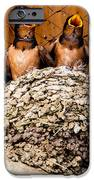 Hungry Baby Swallows - Antelope Island - Utah iPhone Case by Gary Whitton