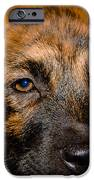 Its a Dogs Life iPhone Case by Ronny Sczruba