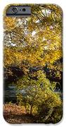 Large Spreading Oak on Banks of West River West Cornwall Connecticut iPhone Case by Robert Ford