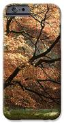 Magnificent Autumn iPhone Case by Anne Gilbert