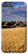 Montana   Field And Hills iPhone Case by Anonymous