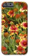 nature - flowers -Blanket Flowers Six -photography iPhone Case by Ann Powell