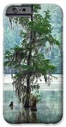 North Florida Cypress Swamp iPhone Case by Rich Leighton