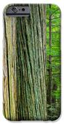 Old Growth Cedars Glacier National Park Painted iPhone Case by Rich Franco